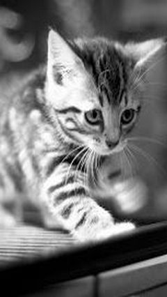 Love Cats Backgrounds