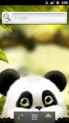 Panda Chub