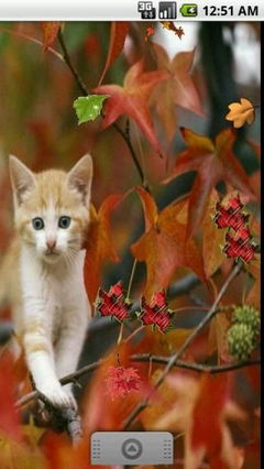 Autumn Kitty