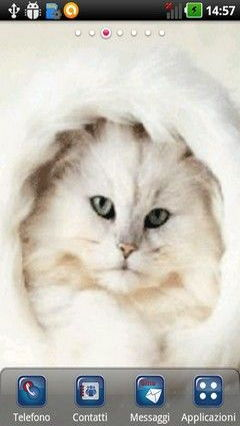 White Little Kitten Lwp