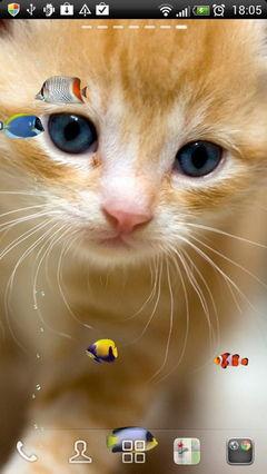 Kitty & Fish