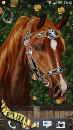 Arabian Horse Interactive.