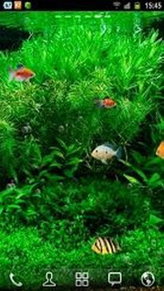 Fish Tank 3d 2013