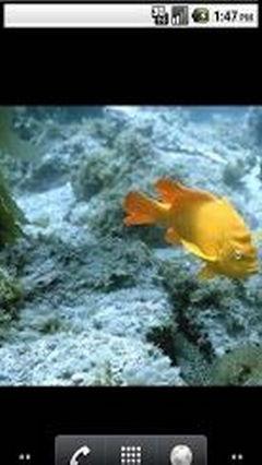 Aquarium Top New