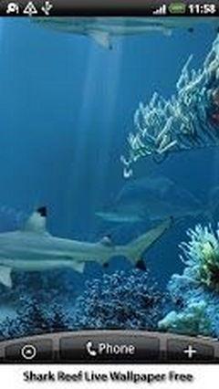 Shark Reef 2013