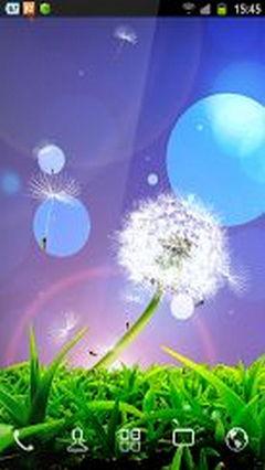 Dandelion Flowers Obermaster