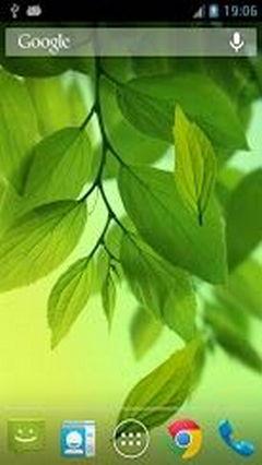 Galaxy S4 Leaf Wasabi