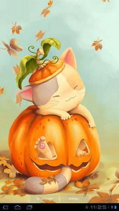Pumpkin Kitten