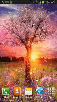 Sparkle Tree Live