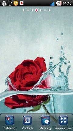 Die Rose Im Wasser Lwp