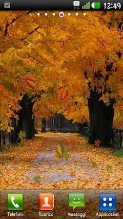Autumn by Lion