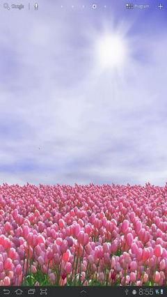 Tulip Field FREE