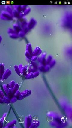 Rain Drop n Flower