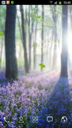 Forest Lavender