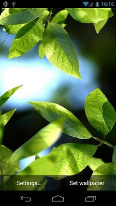 Fresh Leaves HD