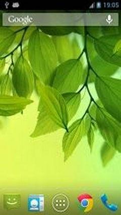 Galaxy S4 Leaf