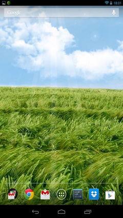 Field in the wind