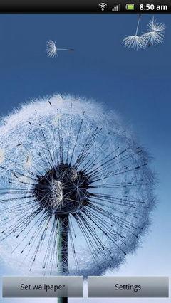 samsung galaxy dandelion