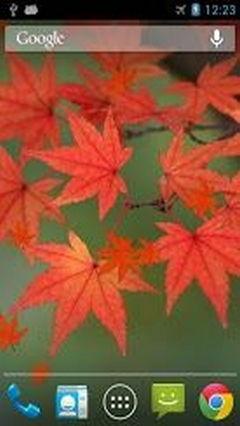 Maple Leaf Wasabi