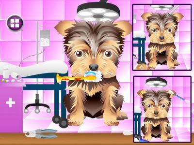 Dog Beauty Salon