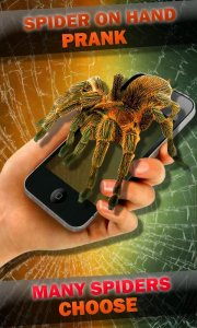 Spider on Hand. Camera Prank
