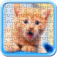 Puzzle cats and kitty