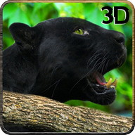 Real Black Panther Wild Attack