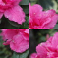 PhotoPuzzle - Flowers free