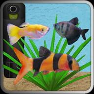 Aquarium Fish - Have you seen my aquarium?