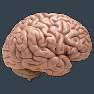 Memory Spell ! - Spelling Game