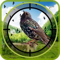 Flying Real Jungle birds hunter Mission