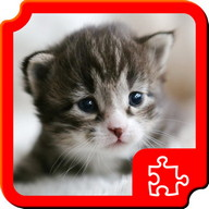 Kitty Puzzles