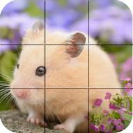 Puzzle - Hamster dễ thương