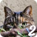 Spot The Cat 2