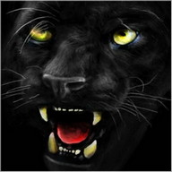 Black panther ferocious