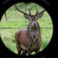 Deer Hunt: Rifle Shot Free