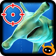 Kill Hammerhead Shark