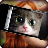 What cat are you? Game & Photo Scanner