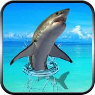 Real Shark marah