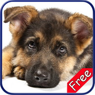 German Shepherd+ Free