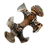 Gr8 bulmaca: Hayvanlar