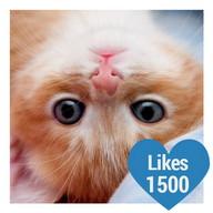 Likes Photo Editor