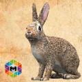 Rabbit Simulator