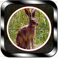 Wild Rabbit Hunting