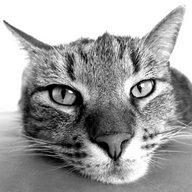 Cat Breeds Quiz