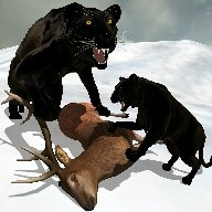 The Black Panther Sim 2016