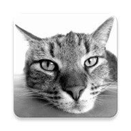 Cat Breeds Quiz
