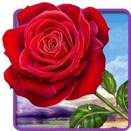 Róża. Magic Touch Kwiaty