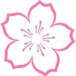 Pink Cherry Tema