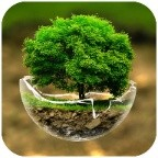 2018HD Green Nature Cartoon Theme for android free